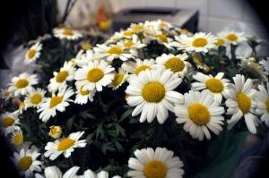 Bouquet de Maguerites